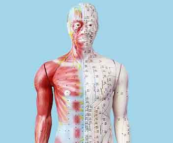 Meridiane- Akupunkturpunkte - Akupunktur - Tuina - TCM